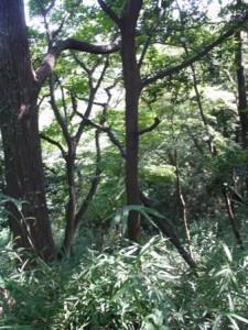 生田緑地にて-2015年9月22日