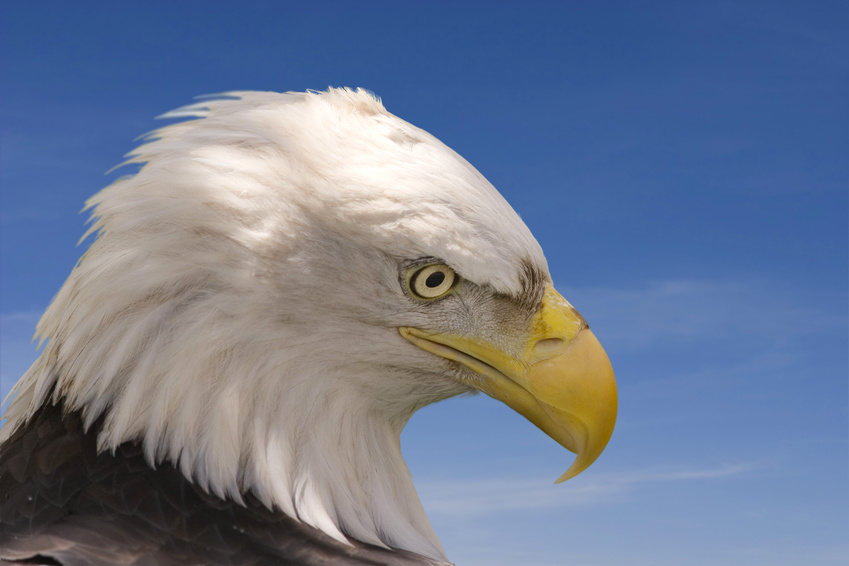 鷲のように観察力を磨きたい方に