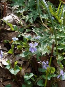 高尾に咲く野の花