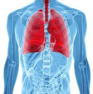 肺-正面から