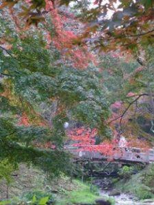 三渓園の紅葉