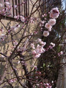 お散歩中に見つけた、春