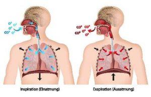 呼吸の解剖図