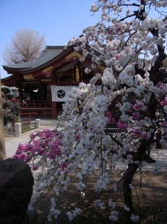 素盞雄神社の桃と桜 2018年4月1日