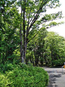 東京学芸大学の森