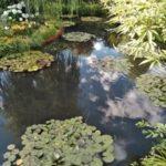 モネ『水蓮』を再現した池袋のお庭