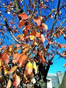 紅葉が始まり、寒くなり始めて、血行が悪くなりがちな時に役立つアレクサンダーテクニーク