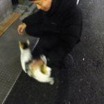 ご近所のネコと戯れるアレクサンダーテクニーク教師かわかみひろひこ