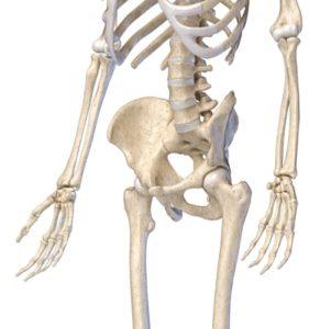 骨盤-斜め正面から