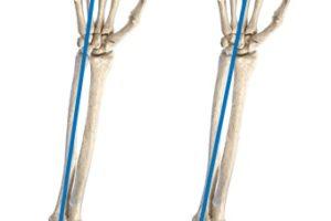 前腕の回内・回外の2つの軸